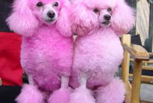 My Poodles / by Jan Ream