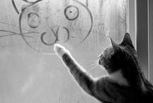 Photograph :: Cats