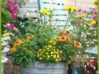 Container Gardening / by Kathy Loftin