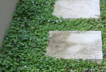 Plants: Groundcovers