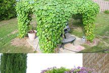 Pergola climbing plants