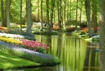 Holland Flowers