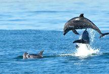 Dolphins / by Sunny Clark