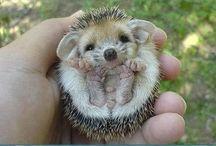 cute:$