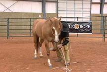 Horse Training/ Exercises