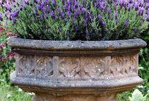Garden inspiration / Gardening and plants