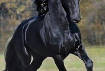 Horses / No hour of life is wasted,that is spent in the saddle