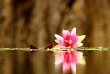 Blomsterbilder