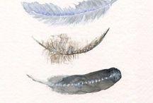 plumas 1