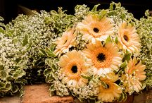 Flowers / All things flowery from bouquets to wild flowers