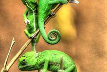 파충류 덕질