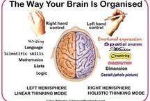 OT Amazing Brain