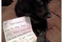 Dog Shaming / by Haley Wahl