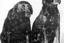 Hailstone Labrador / Labrador Hailstone