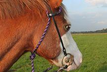 HN Horsewear
