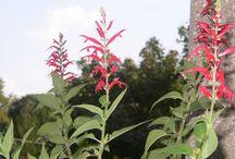 Garden: Our Herbs