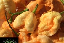 California Reaper peppers at Tyler Farms