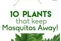 Plantas para eliminar mosquitos