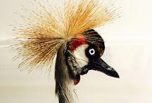 Brudante Taxidermy / Bird Taxidermy by Brudante