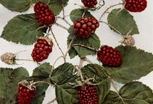 Loganberries / The Loganberry is a hybrid fruit, a blackberry crossed with a raspberry.