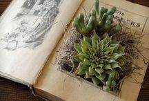 Succulent in book