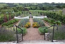 Large Veggie Garden