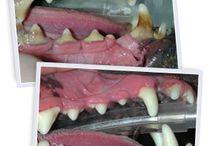 Pet Dentals