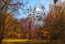 Botanischer Garten München / Der Botanische Garten München-Nymphenburg, mit einer Fläche von 21,20 Hektar und über 350.000 Besuchern im Jahr, gehört zu den bedeutendsten Botanischen Gärten der Welt. Rund 14.000 Pflanzenarten werden hier kultiviert.