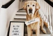 Doggy love / by Melissa Kellogg