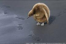 Favourite Wildlife Photos