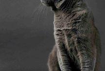 CATS   gatos