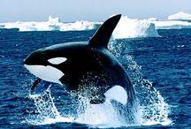Animais marinhos.