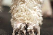 MPL Pet Grooming