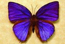 The Perfect Purple