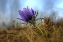 Травы / На тему природы и её светло-мистической стороны, немного с уклоном в травничество