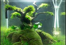 Akwarium (Aquarium)