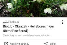 Rostliny&Květiny
