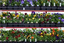 Our Plants - HPF Crops through the Seasons