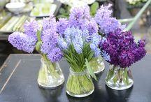 blommor vår