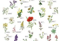 Flowers | Garden