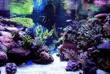 reef aquascapes
