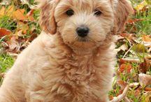 Puppy Love / by Tracey Pruden
