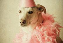 Pets' Fashion