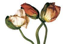 Flowers & Plants, offbeat
