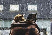 catlove ❤