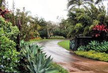 Botanical Gardens, Famous Parks and Garden Ideas / Gardens and Parks I have visited or are on my bucket list