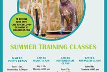 Wag Resort Training Classes