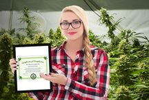 Marijuana Affiliates / Marijuana Affiliates