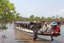 HISTORY OF THE PROJECT per November 2014. / Read more https://wvltv.wordpress.com/2015/06/10/history-of-the-project-per-november-2014/  ADOPT A MANGROVE  http://www.thorheyerdahlclimatepark.org/product/mangrove-tree/