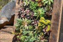 Succulents / ideas for planting succulents